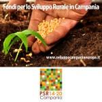 Regione Campania: PSR 2014/2020 – Approvati nuovi Bandi per 154,5 milioni