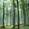 PSR Campania: Proroga del termine per la presentazione delle domande per azioni di imboschimento di superfici agricole e non agricole