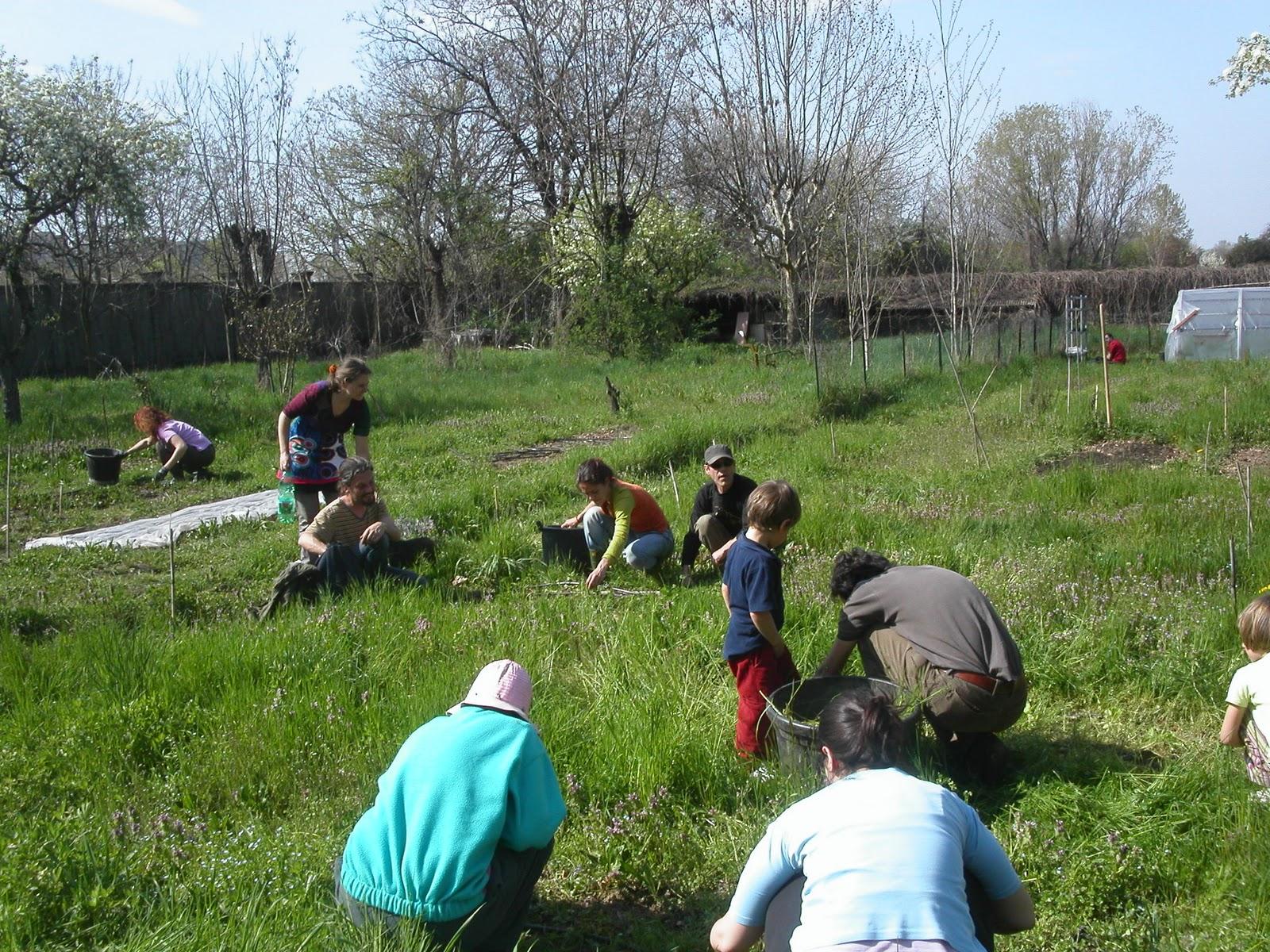 Cosa Seminare A Gennaio mese di gennaio: semina, raccolto e lavori nell'orto