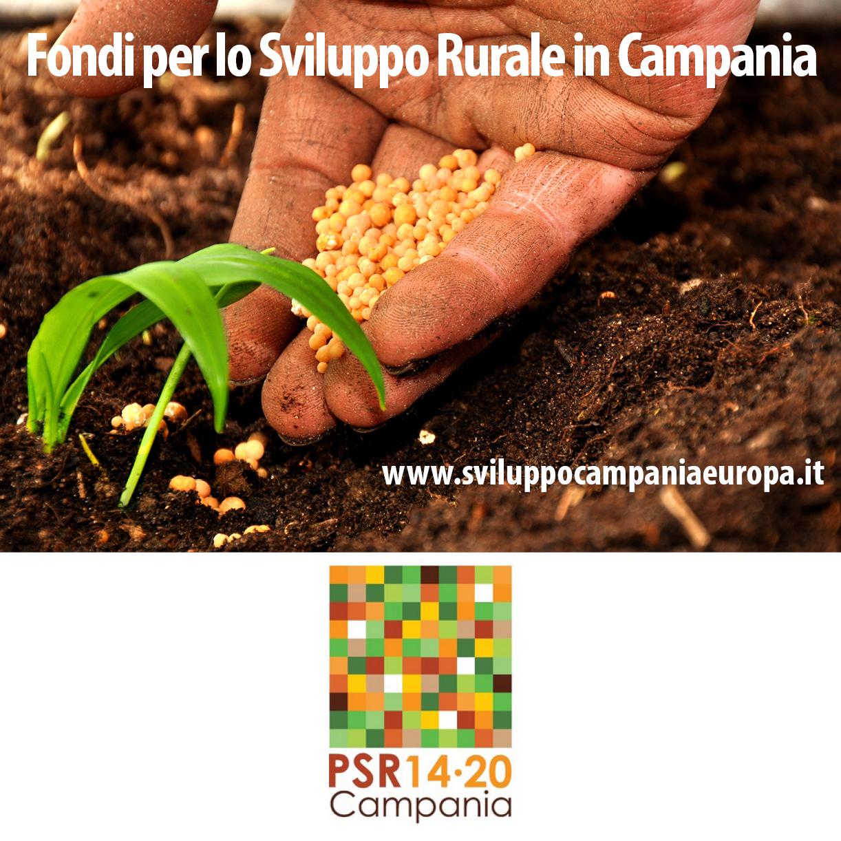 psr-campania
